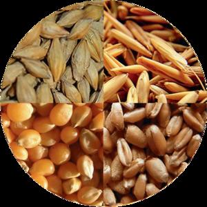 купим постоянно рапс,  пшеницу,  сою,  кукурузу,  ячмень,  подсолнечник